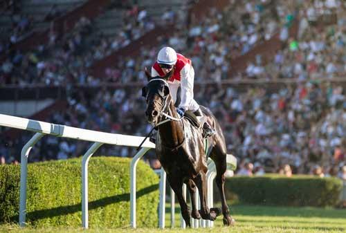 Horce Racaing Betting Japan