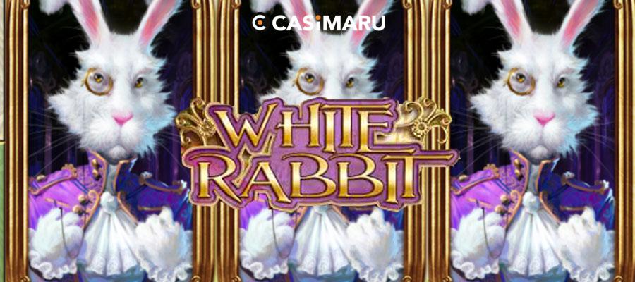 white-rabbit-banner